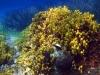 halkidiki-sitonija-zapadna-obala-nikiti-koviu-26