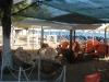 halkidiki-sitonija-neos-marmaras-plaza-10