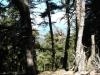 kefalonija-nacionalni-park-enos-16g