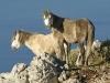 kefalonija-nacionalni-park-enos-28g