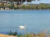 kefalonija-laguna-kutavos-3g