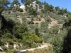 tasos-akropolj-4-g