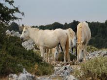 Kefalonija-Nacionalni-park-Ainos