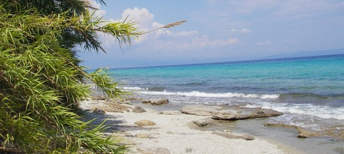 Na mnogim plažama borovi dopiru sve do obale