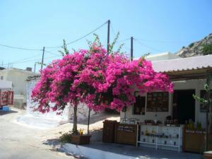 Selo Monolitos