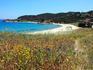 Plaža Platania