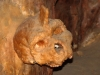 petralona-skull-covered-by-stalagmite