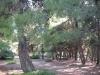 halkidiki-sitonija-zapadna-obala-neos-marmaras-lagomandra-3